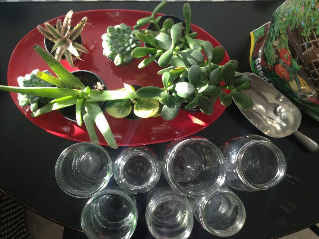 succulent making
