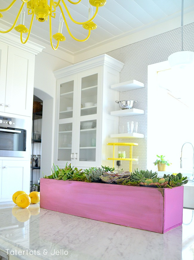 orchid-succulent-diy-planter-at-tatertots-and-jello[1]