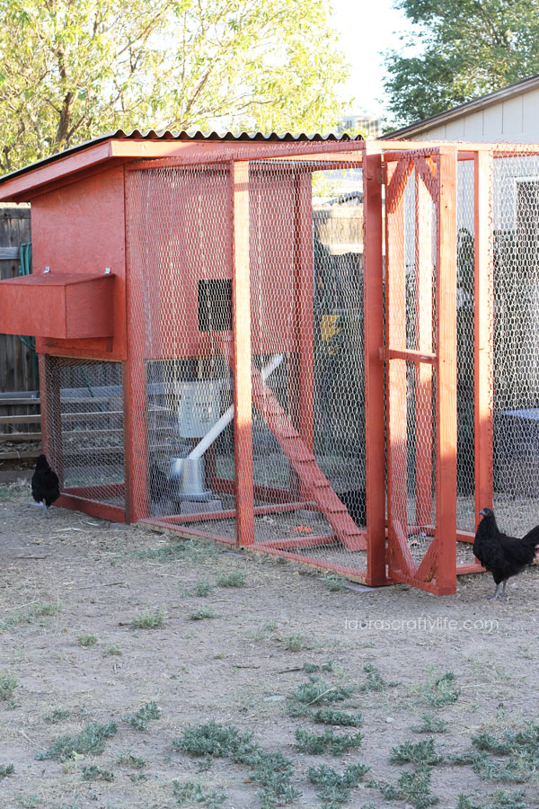 How-to-Build-a-Chicken-Coop-with-free-plans-Lauras-Crafty-Life