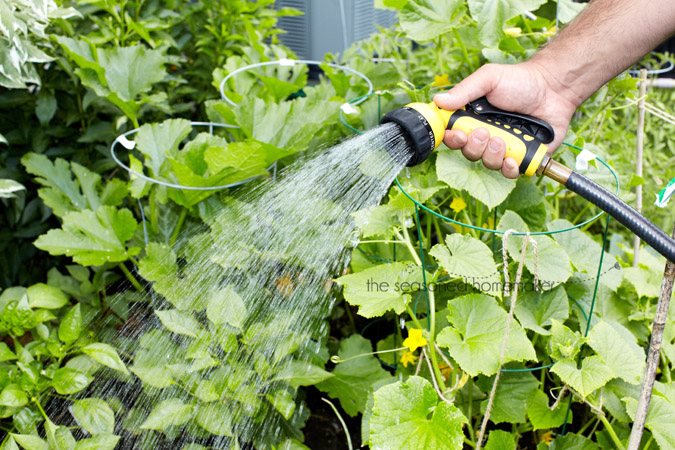 Hand of man with hose watering vegetables garden.