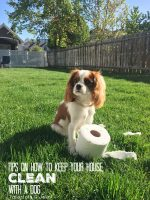 Our Puppy and Keeping Your House Clean with a dog!