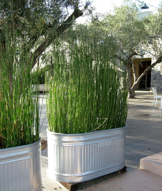 plant grass for easy privacy screen