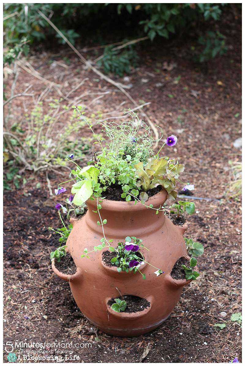 A terra cotta pot with openings for plants has been potted with edible plants like pansies and herbs growing out of the opening.