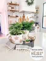 Terra Cotta Star Herb Planters